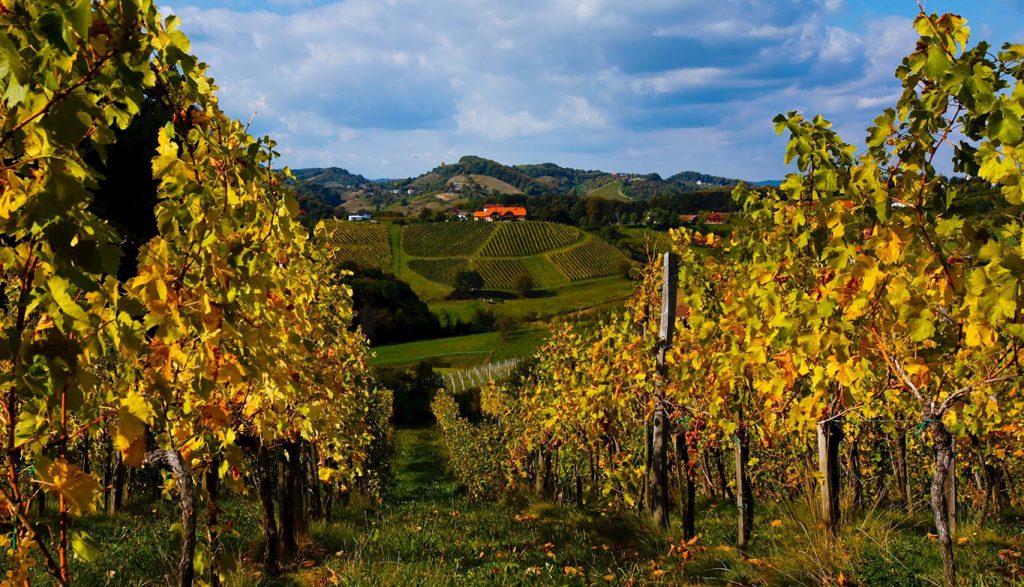 Fontana vin Vodole – vinska cesta Vodole